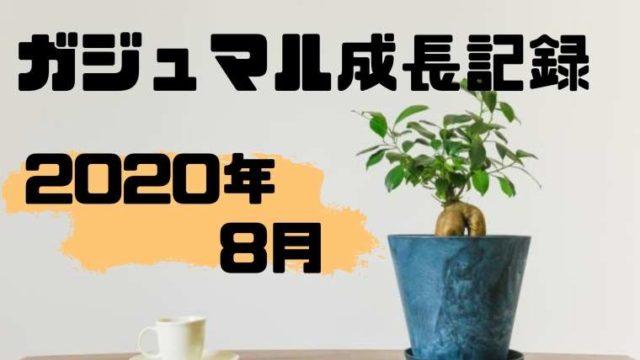 ガジュマル成長記録2020年8月