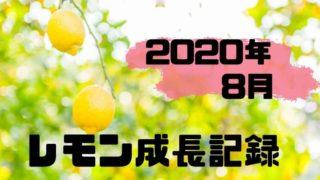 レモン成長記録2020年8月