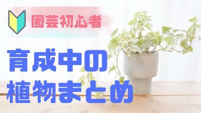 育成中の植物まとめ