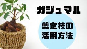 ガジュマルの剪定枝の活用方法