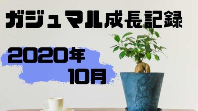 2020年10月のガジュマルの成長記録