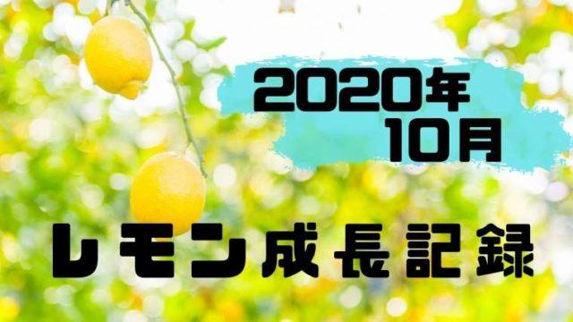 2020年10月のレモン成長記録