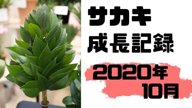 2020年10月のサカキ成長記録